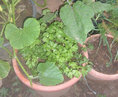 Innaffiare i vasi in caso di assenza coltivare l 39 orto in - L orto in giardino ...